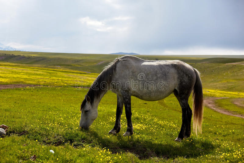Download Mare grazes in the meadow stock photo. Image of freedom - 19728450