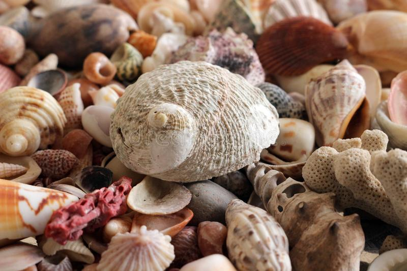 Mare Shell Collection immagini stock