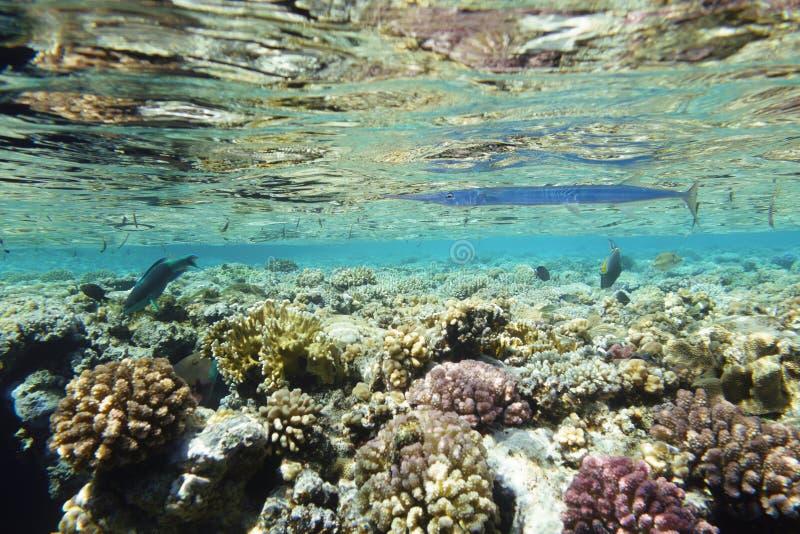 Mare subacqueo del paesaggio di vita in rosso immagini stock