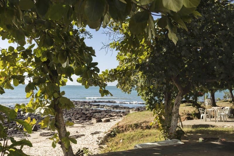Mare visto attraverso gli alberi immagine stock libera da diritti