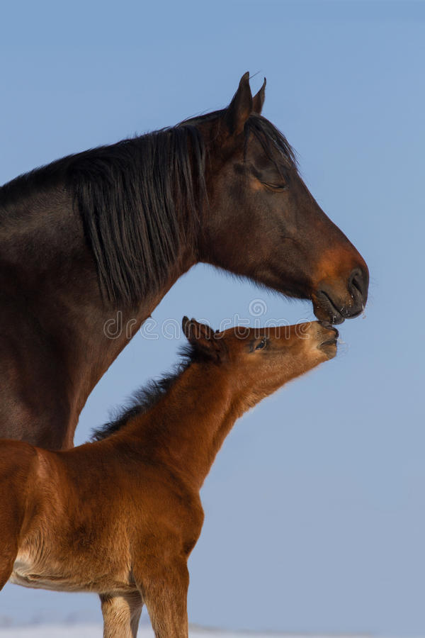 Free Mare With Foal Royalty Free Stock Images - 65737699