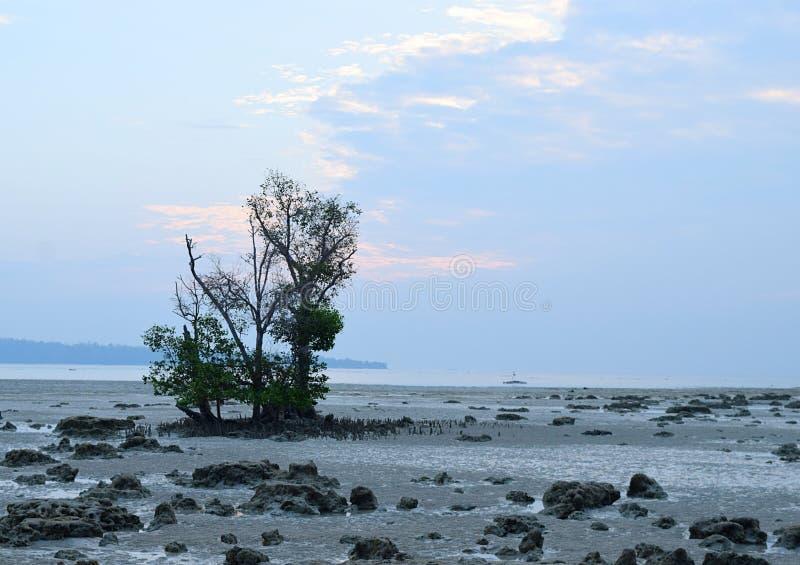 Marea baja con el árbol del mangle en Rocky Beach en el amanecer - playa de Vijaynagar, isla de Havelock, Andaman Nicobar, la Ind imágenes de archivo libres de regalías