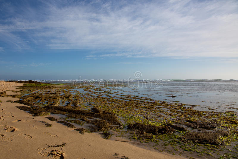 Marea baja y algas marinas en Sorrento, Australia imágenes de archivo libres de regalías