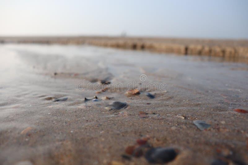 Marea e conchiglia fotografie stock