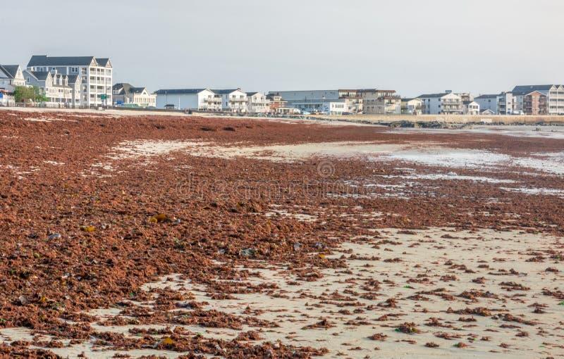 Marea roja durante la estación de la tormenta en Hampton Beach Coast imagenes de archivo
