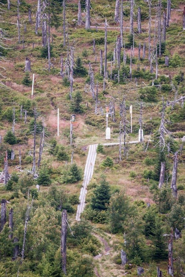 Marfleckl轰鸣声Lusen小山在德语的-捷克边界巴法力亚森林里 库存照片