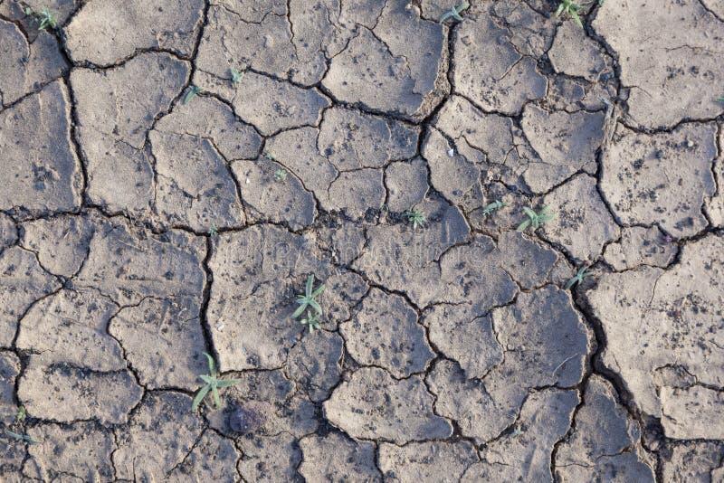 Marga seca en el desierto imagen de archivo