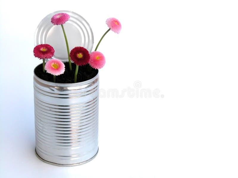 Download Margarida foto de stock. Imagem de inflorescence, flores - 107442