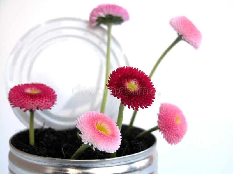 Download Margarida imagem de stock. Imagem de jardim, daisy, possa - 107443