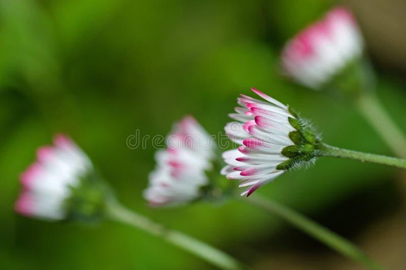 Download Margarida imagem de stock. Imagem de plantas, nave, cor - 16874569