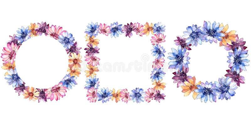 Margarida africana colorida Flor botânica floral Quadrado do ornamento da beira do quadro foto de stock