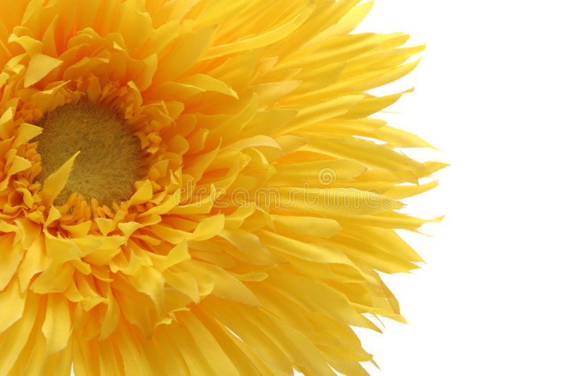 Margarida amarela bonita do gerbera isolada no branco fotos de stock royalty free