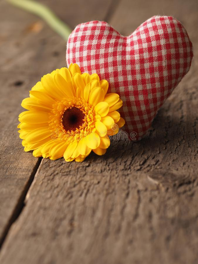 Margarida amarela do gerbera com forma do coração da tela imagens de stock royalty free