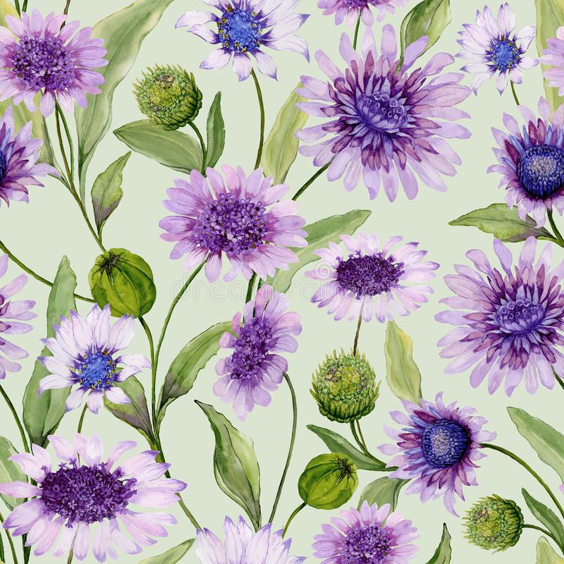 A margarida azul e roxa bonita floresce com botões fechados e folhas na luz - fundo verde Teste padrão sem emenda da mola ilustração royalty free