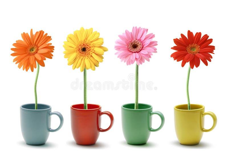 Margarida colorida na caneca de café fotografia de stock