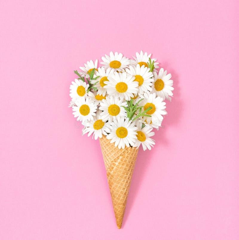 A margarida da camomila floresce a configuração lisa floral do fundo de papel cor-de-rosa imagem de stock