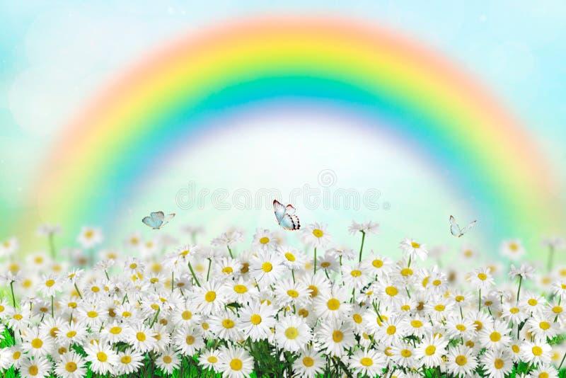 margarida e borboleta da mola no arco-íris da sagacidade do prado Mola da natureza ou fundo do verão Espaço para o texto imagem de stock royalty free
