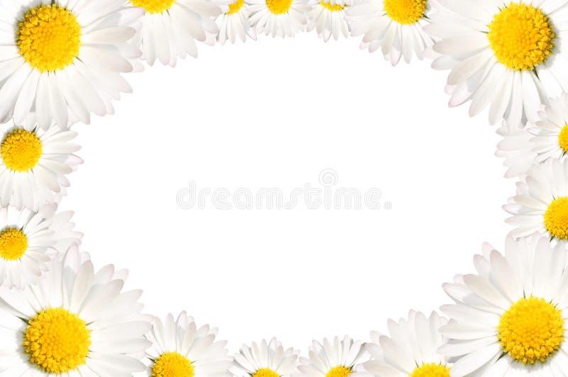 A margarida floresce o frame imagem de stock