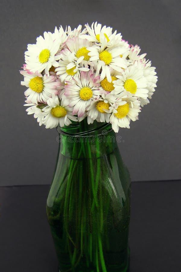 A margarida floresce o ramalhete em um vaso foto de stock royalty free