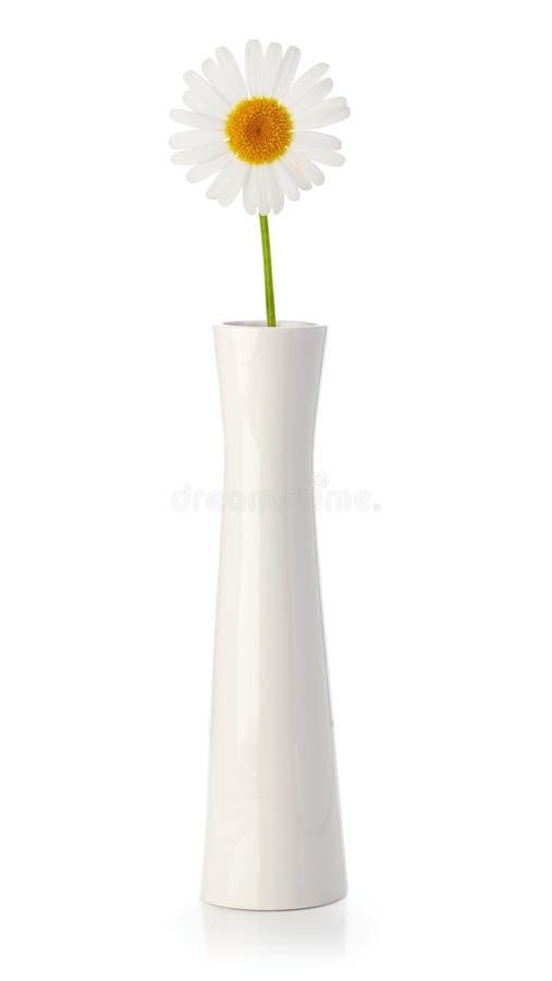 Margarida no vaso branco fotografia de stock