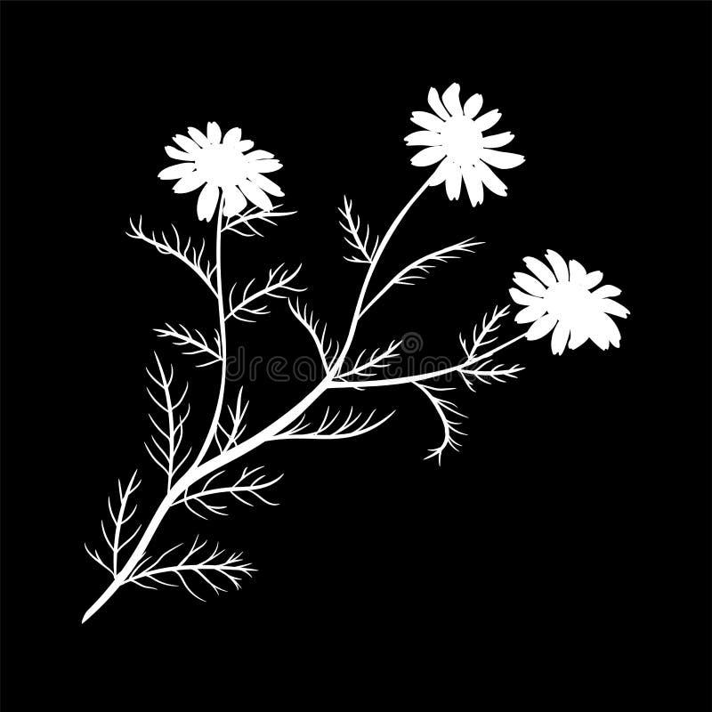 Margarida ou camomila Wildflower isolado com haste Ícone isolado ilustração do logotipo do vetor ilustração royalty free