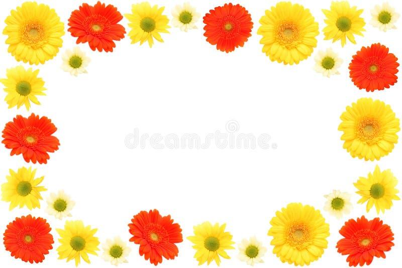 Download Margaridas imagem de stock. Imagem de ícone, botanical - 540411