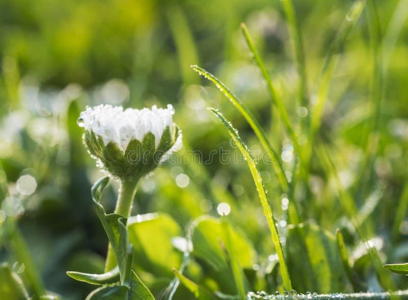 Margaridas brancas em um jardim fotos de stock