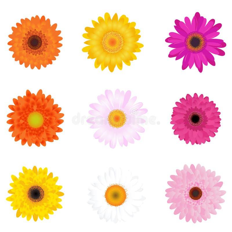 Margaridas coloridas. Vetor ilustração royalty free
