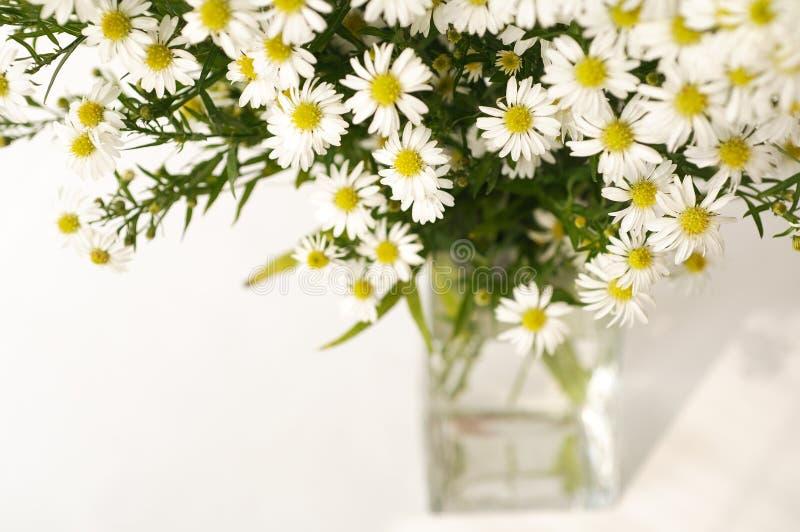 Margarita blanca en un florero imágenes de archivo libres de regalías