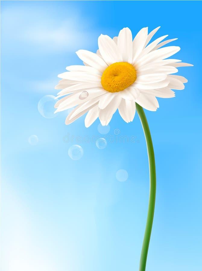 Margarita blanca hermosa delante del cielo azul libre illustration