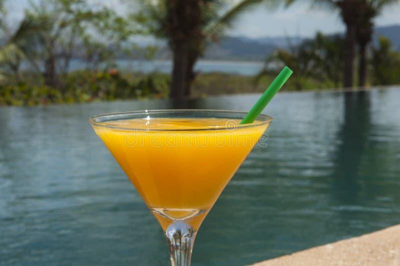 Margarita del mango dallo stagno immagine stock