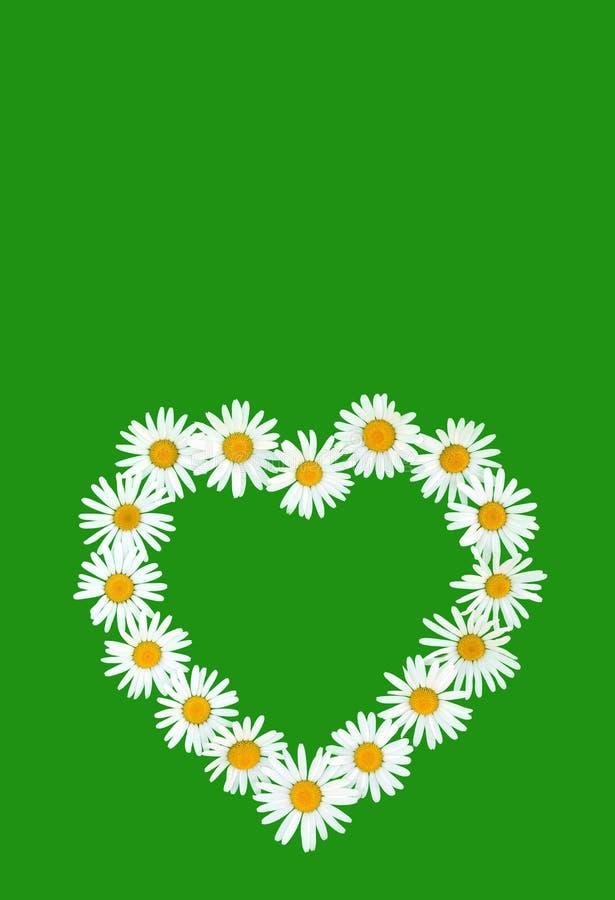Margarita en dimensión de una variable del amor sobre fondo verde foto de archivo libre de regalías
