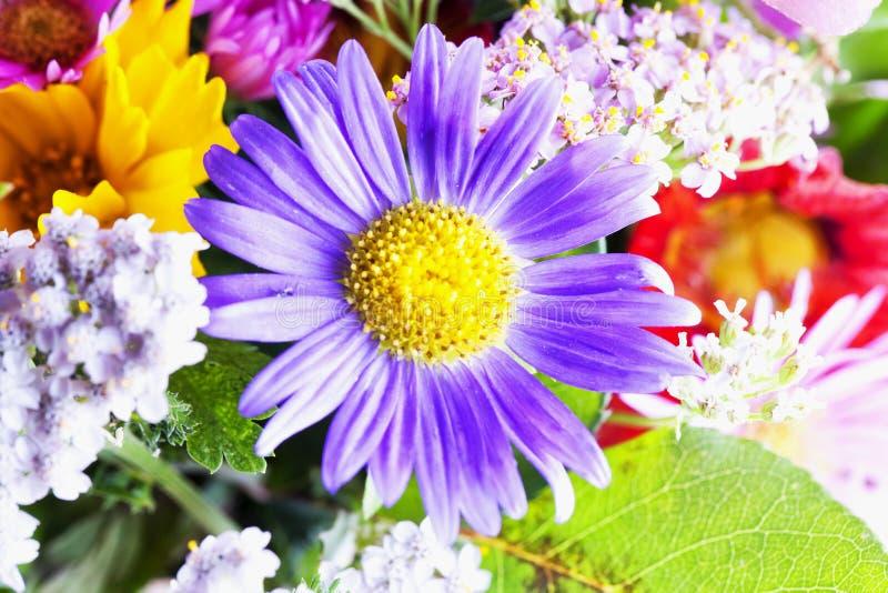 Margarita púrpura en un manojo imágenes de archivo libres de regalías