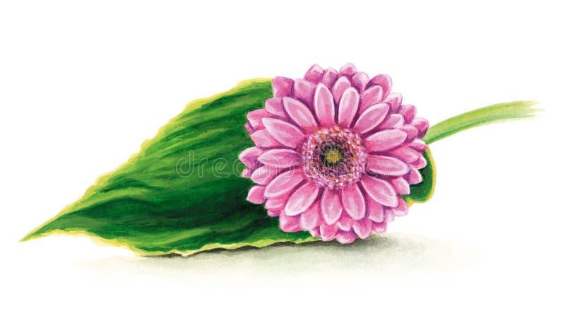 Margarita rosada del gerber stock de ilustración