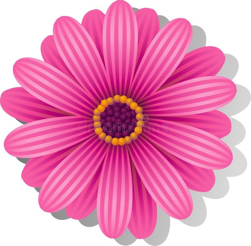 Margarita rosada hermosa de Gerber ilustración del vector