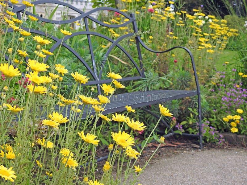 Margaritas amarillas con la silla del banco del asiento de jardín del metal en jardín del parque fotografía de archivo libre de regalías