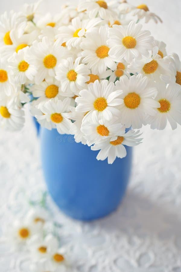 Margaritas blancas imagen de archivo