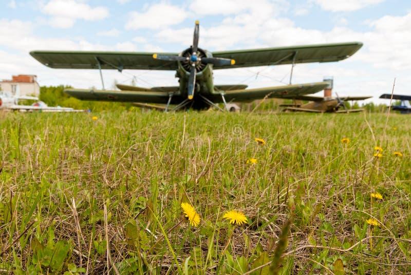 Margaritas blancas con el aeroplano AN-2 en fondo fotos de archivo libres de regalías