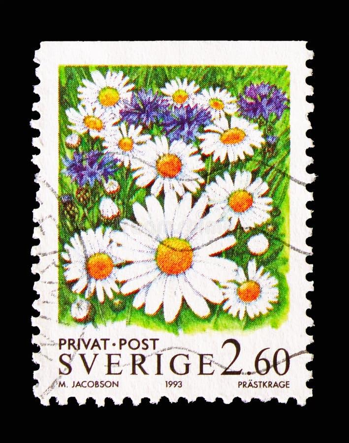 margaritas Buey-observadas, sellos de la rebaja - flores, serie, circa 1993 fotos de archivo libres de regalías