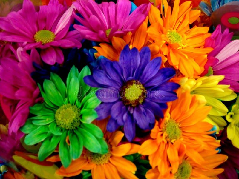 Margaritas coloridas de la primavera imagen de archivo