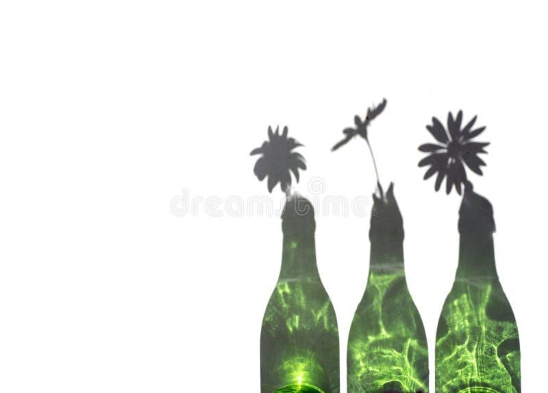 Margaritas en botella verde imagen de archivo