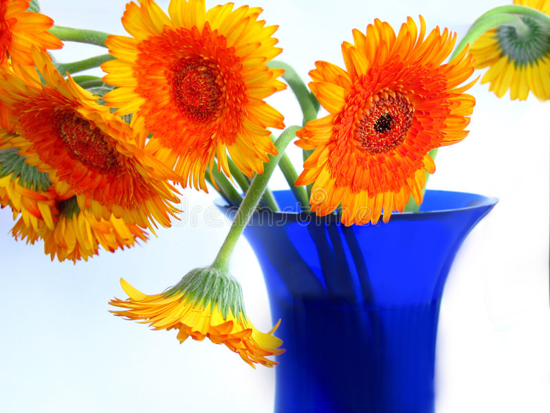 Margaritas en el florero azul fotografía de archivo