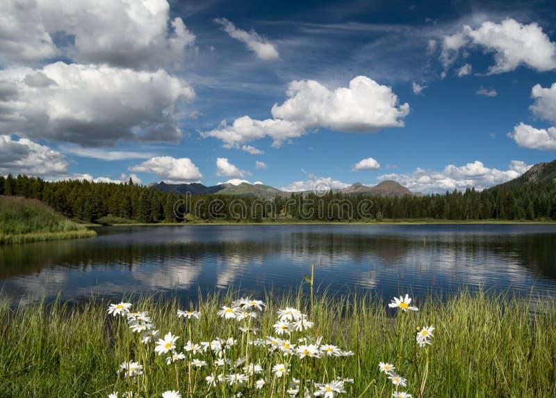 Margaritas en el lago Andrew, CO con la reflexión de la nube fotos de archivo