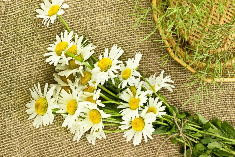 Download Margaritas En Fondo De La Arpillera Foto de archivo - Imagen de verde, floración: 41918566