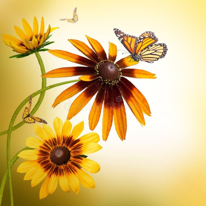 Margaritas multicoloras del gerbera y una mariposa foto de archivo libre de regalías