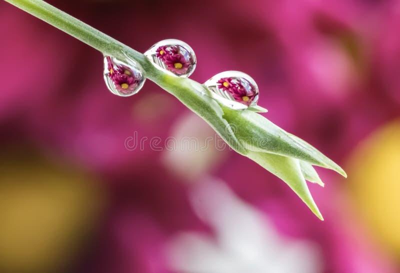 Margaritas púrpuras refractadas en descensos del agua en tronco de la flor imágenes de archivo libres de regalías