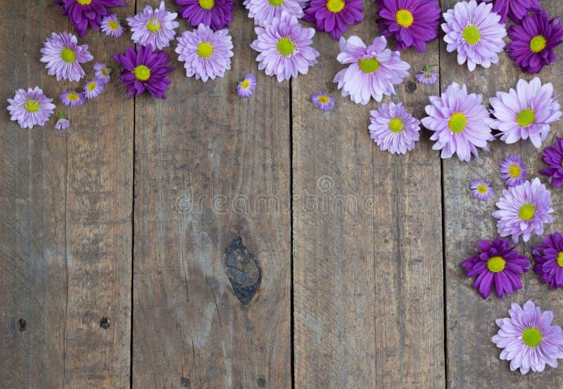 Margaritas púrpuras y de la lila en el fondo de madera del piso fotos de archivo libres de regalías