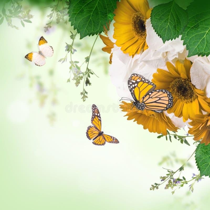 Margaritas y mariposa en un blanco imágenes de archivo libres de regalías