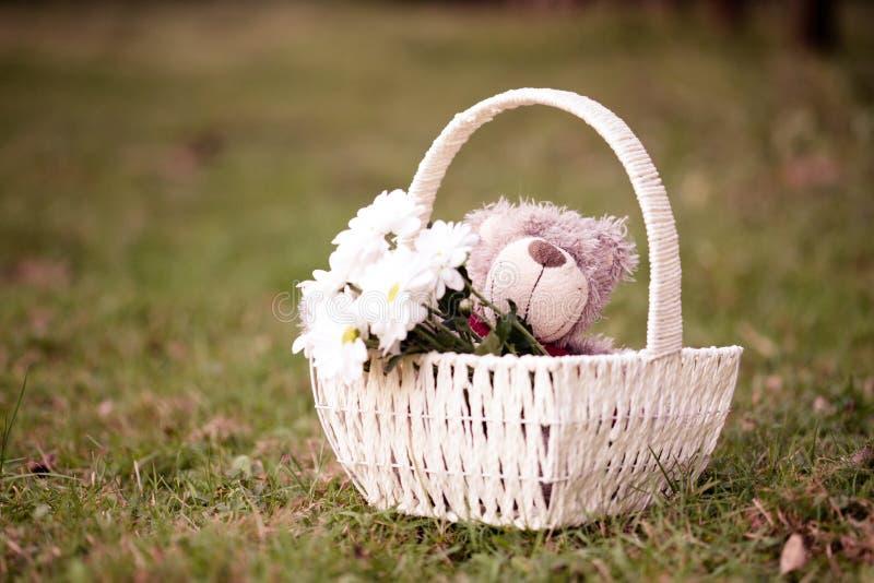 Margaritas y oso de peluche foto de archivo libre de regalías