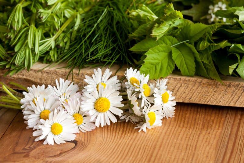 Margaritas y otras plantas comestibles salvajes que crecen en primavera imagenes de archivo